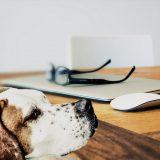 PETKIT Mate 寵物智能伴侶,做你的「影之分身」